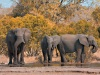 stockvault-kruger-park-elephants133552