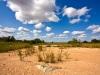 stockvault-kruger-park-landscape133563