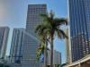 Miami Down town